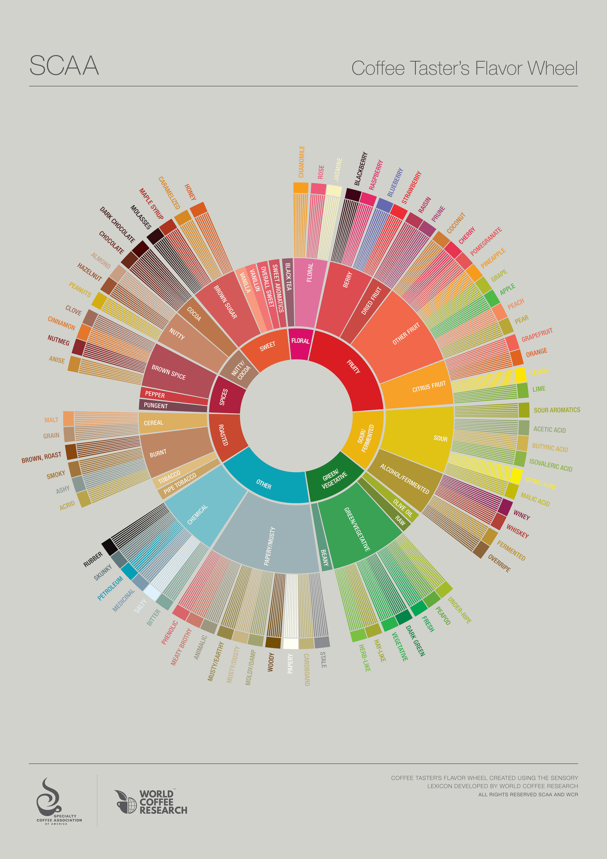 SCAA Coffee Flavor Wheel